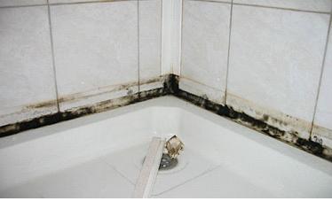 Грибок и плесень в ванной